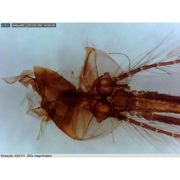 Dino-Lite medium csomag, digitális mikroszkóp iskolai felhasználásra 10-70-200x